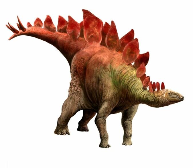 Stegosaurus er kjent for de store beinplatene på ryggen.
