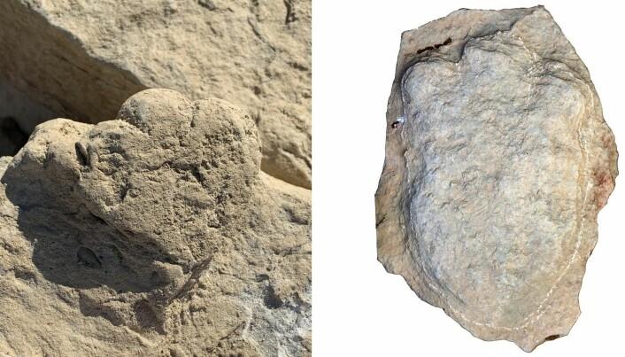 Her ser vi det lille fotavtrykket til venstre, og et av de store til høyre. Det store har en mer avlang form.