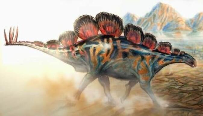 """Stegosaur-arten <span class="""" italic"""" data-lab-italic_desktop=""""italic"""">Wuerhosaurus homheni</span> levde i området som fotsporene er funnet."""