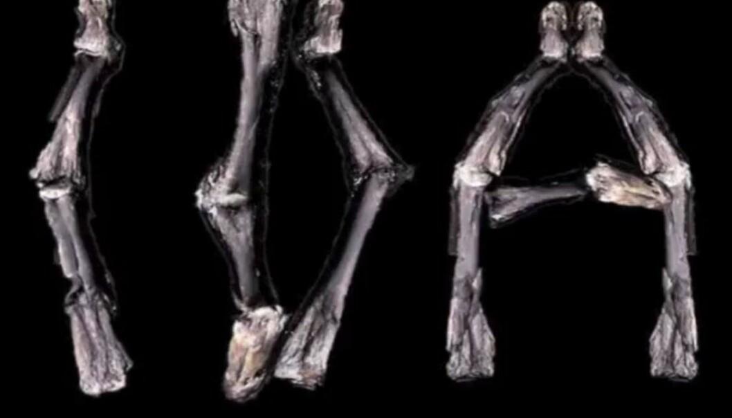 Fortel om fossilet Ida i ny rockelåt