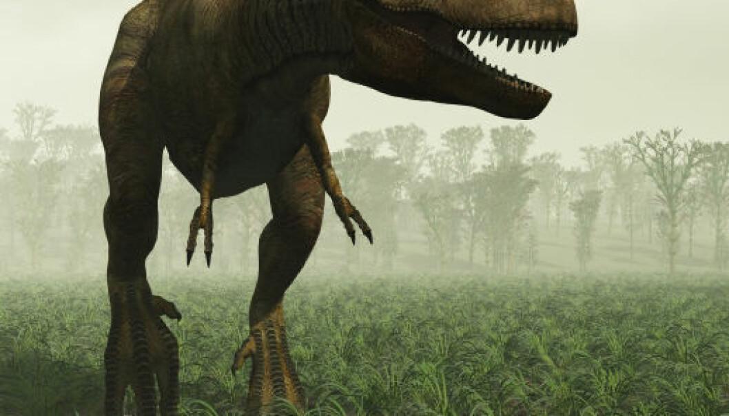 Kan rovdyret Tyrannosaurus rex gjenoppstå fra de svært døde?(Illustrasjon: iStockphoto)