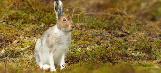 Hvorfor finnes det ikke kjempestore harer og kaniner?