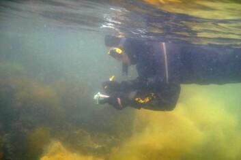 Observasjoner noteres med det samme under vann. (Foto: Trond Amundsen)