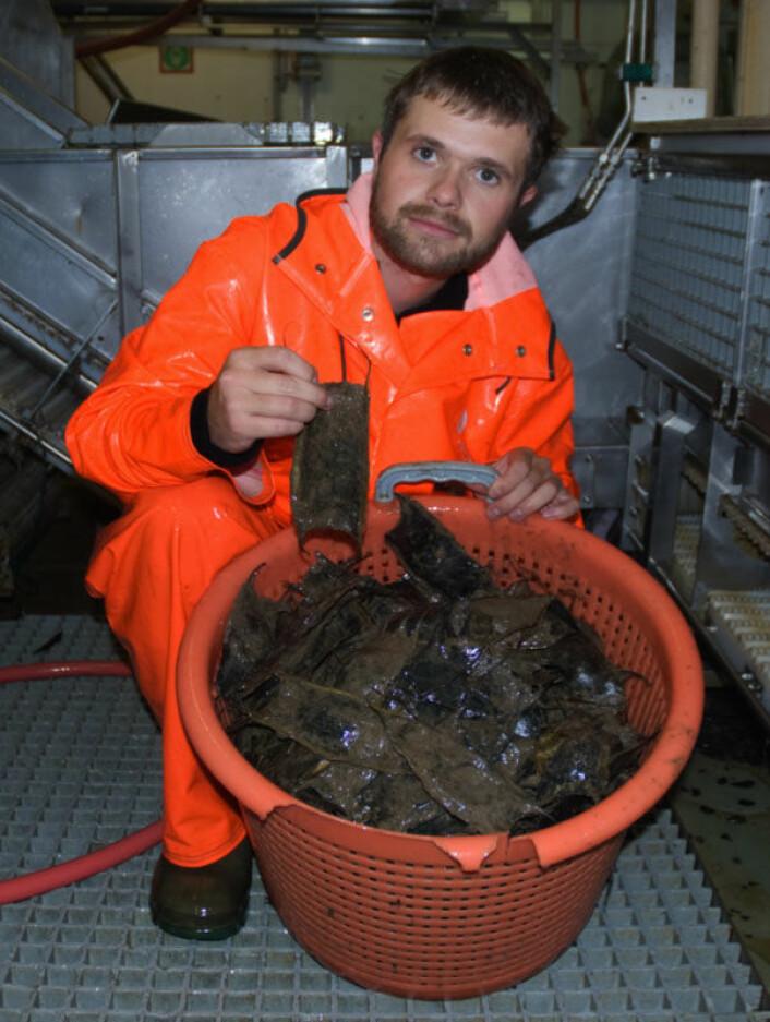 Arve Lynghammar med mengder av isskate-egg funnet like sør for Svalbard. (Foto: Merete Kvalsund, Havforskningsinstituttet)