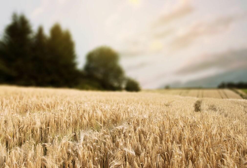 Lystgass utgjør en tredjedel av det totale klimagassutslippet fra matproduksjon. Utslippene skyldes i hovedsak bruken av kunstgjødsel.