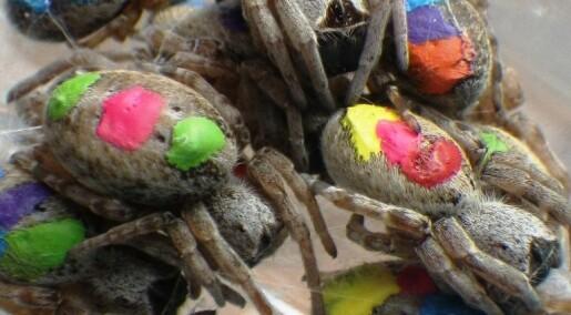 Edderkopper med personlig yrkesvalg