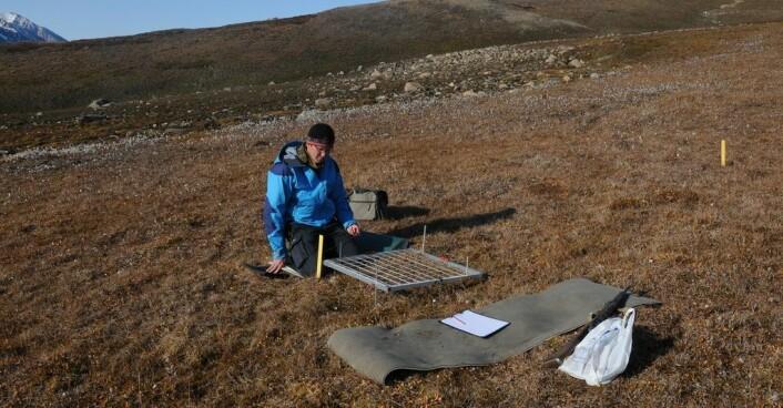 Moseforsker Kristian Hassel i felt på Nordøst-Grønland. (Foto: Tommy Prestø, NTNU Vitenskapsmuseet)