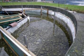 Forsker Bjørn Mejdell Larsen og hans kolleger har bygget et kunstig elveløp for å finne ut om elvemuslinger kan overleve en tørrlegging, eventuelt om de sanser at de har lite vann og søker seg ut i områder med dypere vann. (Foto: NINA)