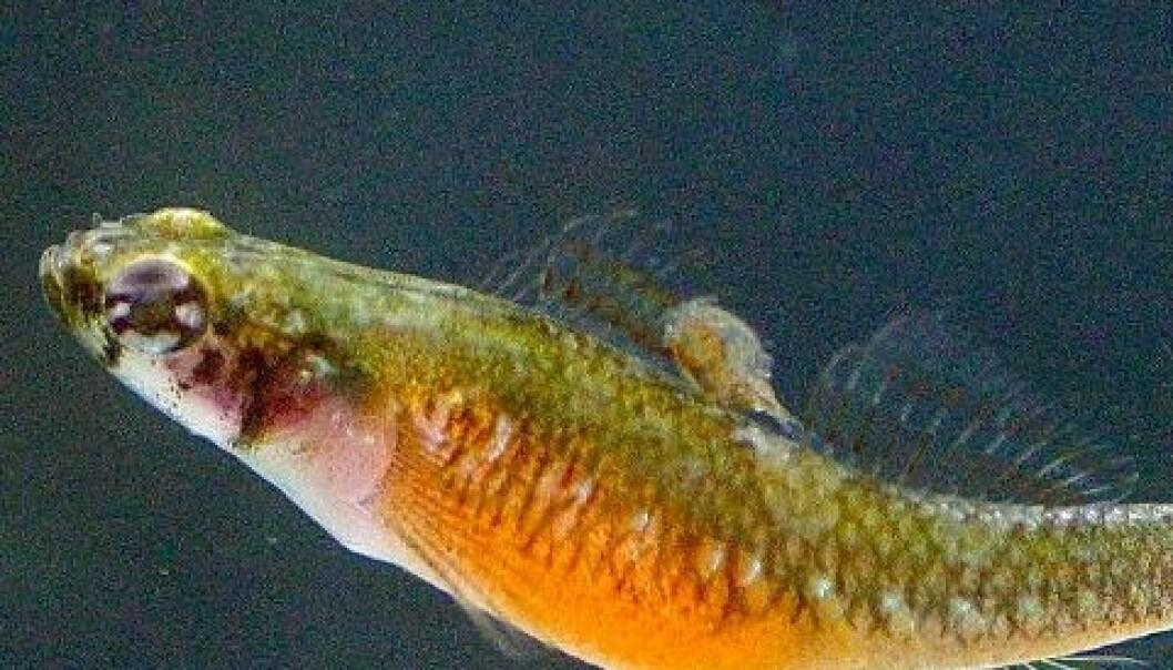 Frustrerte fiskefruer