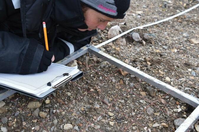 NINA-forsker Siri Lie Olsen registrerer vekster i en av rutene som ble lagt ut for å overvåke vegetasjonen i anleggsområdet.