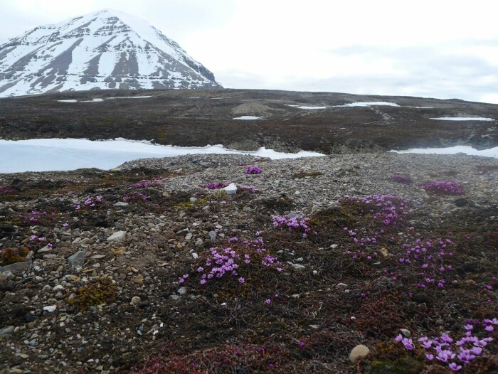 – Det er en myte at det stilles strengere krav til miljøhensyn i Norge enn i andre land vi kan sammenligne oss med, sier seniorforsker Dagmar Hagen.