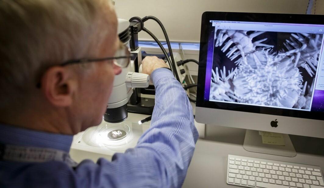 Dyra Arne Hassel undersøker er mikroskopiske – her er det ei slangestjerne som vert undersøkt i mikroskop.