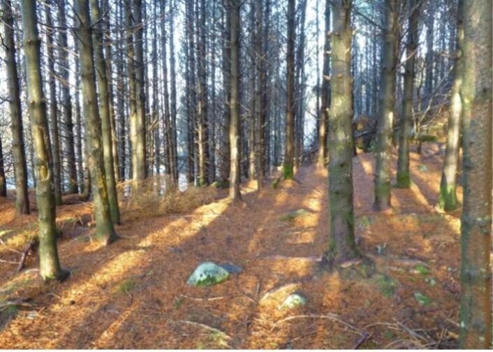 Plantet skog med liten variasjon i livsmiljøer .