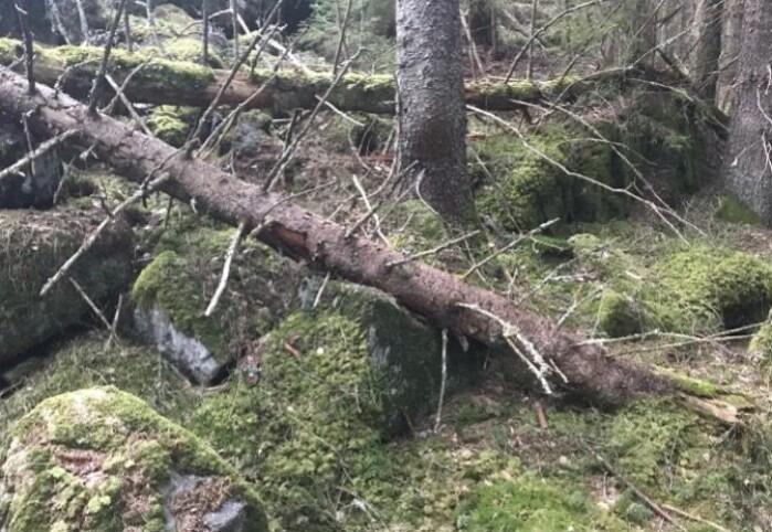 Skog med naturlig regenerering og varierte livsmiljøer.