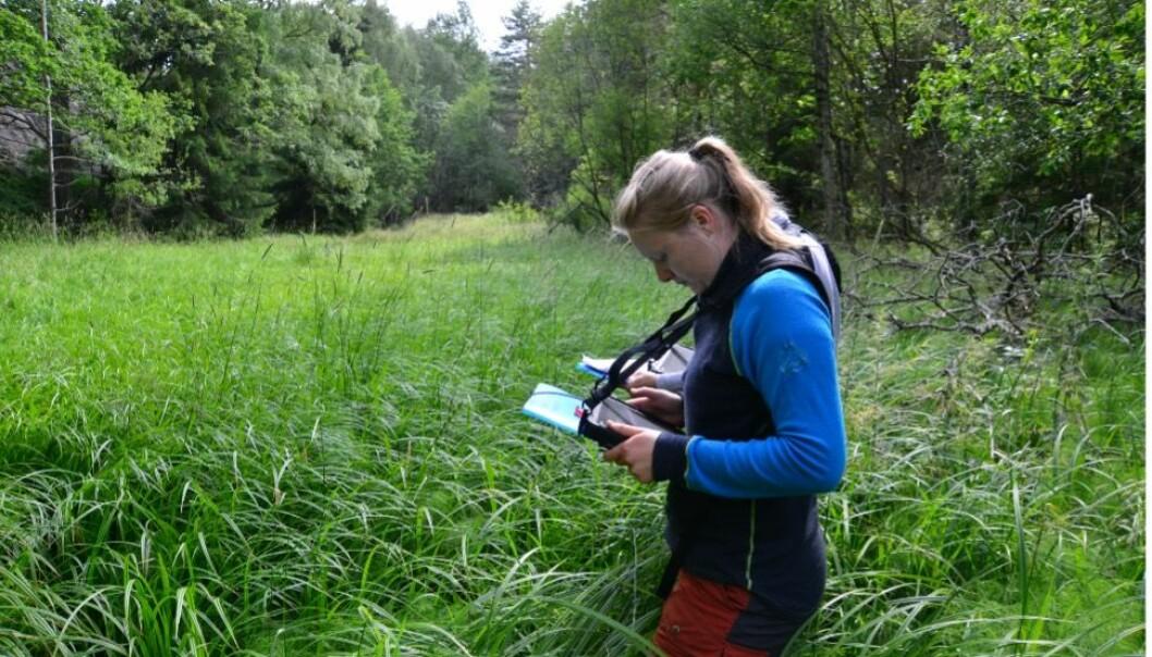 Natursystemer i NiN beskrives med utgangspunkt i arter og miljøvariasjon, og digitale kart tegnes på felt-PC.