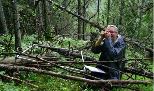 Hva er en naturlig skog?