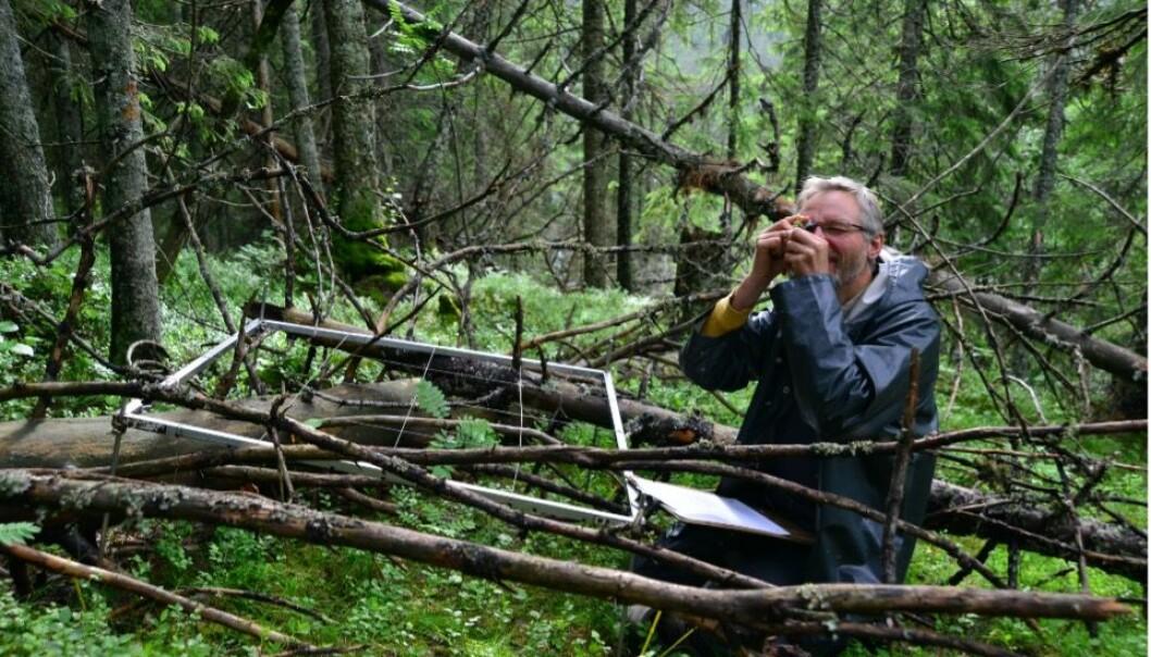 Natursystemer i NiN beskrives med utgangspunkt i arter og miljøvariasjon.