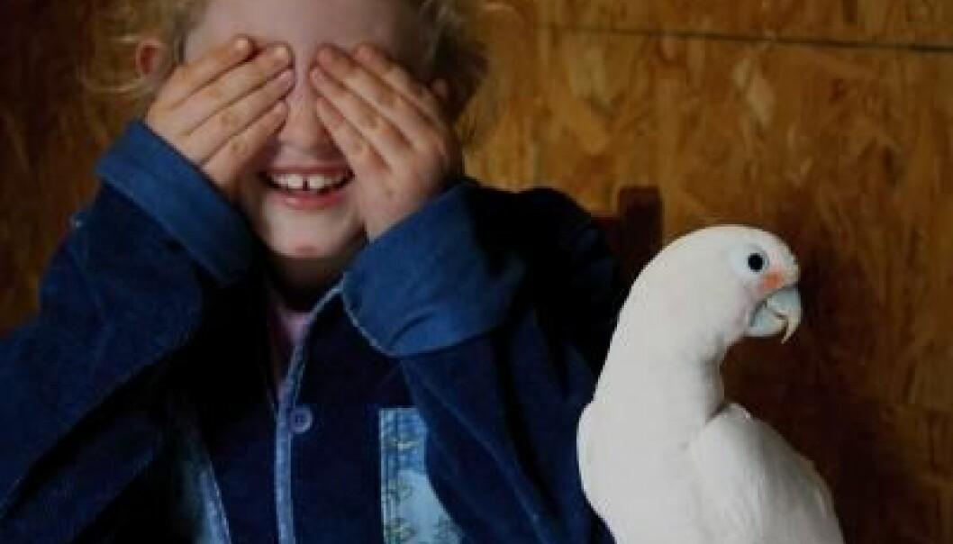 I noen oppgaver er kakaduen mye bedre enn fireåringen, men den som barn synes er lettest, er den som kakaduene synes var vanskeligst. Alice Auersperg
