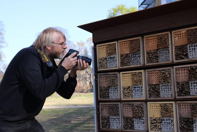 Hallvard Elven følger spent med på hva som kryper inn i insekthotellet, men han er enda mer spent på hva som kommer ut. Så langt har han funnet parasittveps, men ikke den ufrivillige verten.