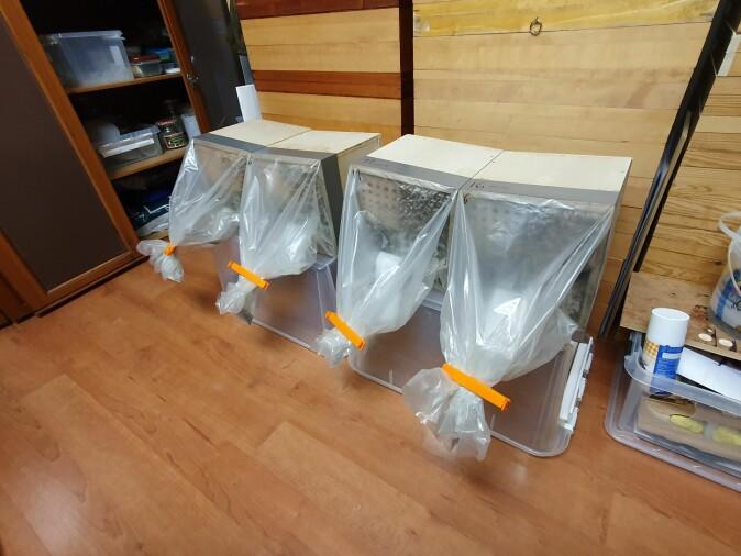 Modulene ble tatt inn for klekking og utstyrt med plastposer for å fange opp insekter.