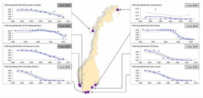 Utviklingen av hannlige kjønnskarakterer hos hunner av purpursnegl (imposex) har gått markert tilbake over store deler av norskekysten etter at bruken av tinnholdige tilsetningsstoffer (TBT) i skipsmaling ble forbudt. (Foto: (Fra NIVA-rapport 6432-2012))