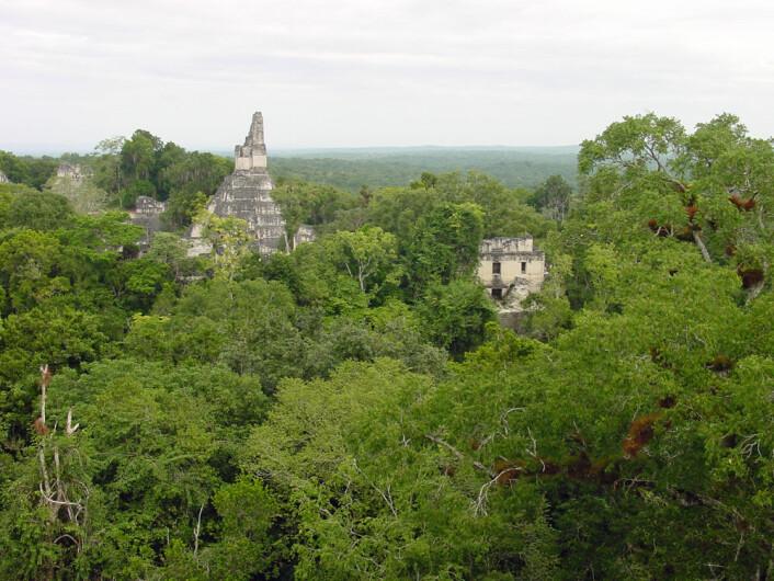 Mayabyen Tikal, der takbjelken er hentet fra, ligger i jungelen i Guatemala. (Foto: Douglas J. Kennett, Penn State)
