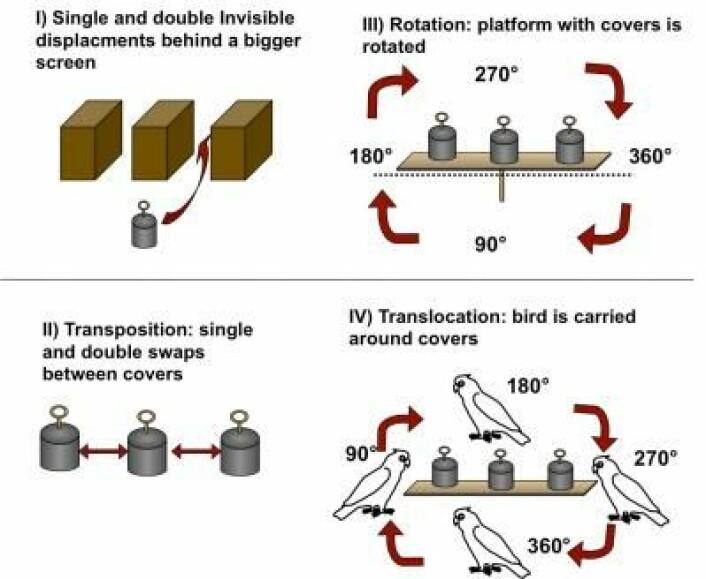 En skjematisk fremstilling av de ulike oppgavene som kakaduene gjorde i studien. (Foto: (Illustrasjon: Alice Auersperg))