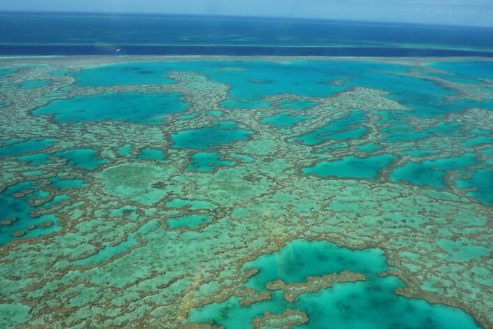 Great Barrier Reef utenfor Australia er verdens største korallrev. (Foto: Colourbox)