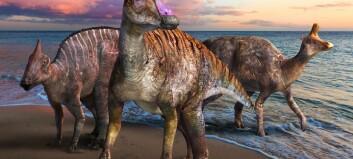 Dinosaur med nebb funnet i Japan