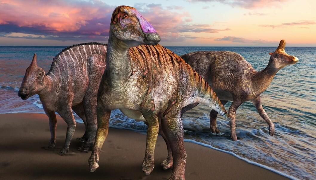 Dyret i midten av bildet er en illustrasjon av sånn vi tror dinosauren de har funnet i Japan kan ha sett ut når den levde. De andre dinosaurene til høyre og venstre er dinosaurer i samme familie som utviklet seg i senere tid.