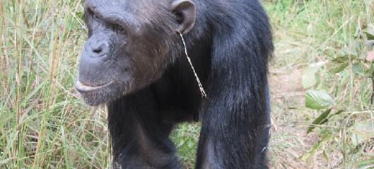 Også dyr kan bry seg om mote