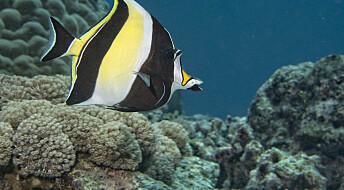 Koraller kan beskytte mot ekstremvær