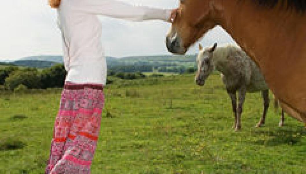 Terapi med hester bidro til at pasienter med spiseforstyrrelser viste en økt grad av selvstendighet, selvtillit, ansvar og kontroll. www.colourbox.com