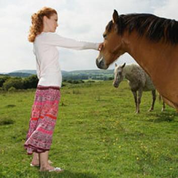 Terapi med hester bidro til at pasienter med spiseforstyrrelser viste en økt grad av selvstendighet, selvtillit, ansvar og kontroll. (Foto: www.colourbox.com)