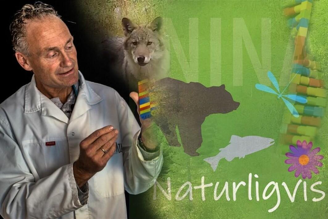 En av de store fordelene med dagens DNA-overvåkning er at dyrene ikke blir forstyrret.