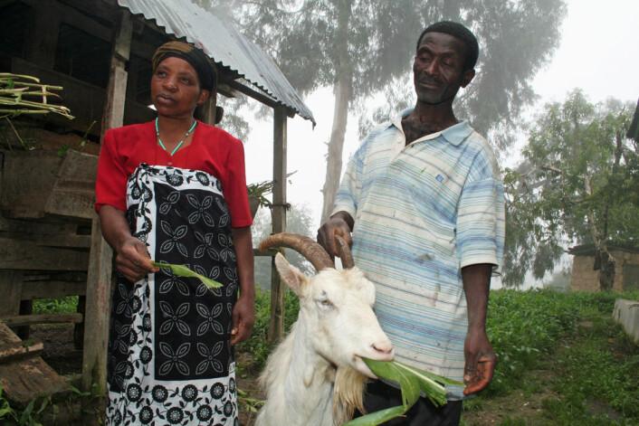 Jovita Joseph og Simforiani L. Mahenge er blant flere hundre småbønder i de grønne Ulugurufjellene i Tanzania som har tatt i bruk norske melkegeiter. Her tygger yndlingsgeita, ti år gamle Chama, fornøyd på maisblader. (Foto: Asle Rønning)