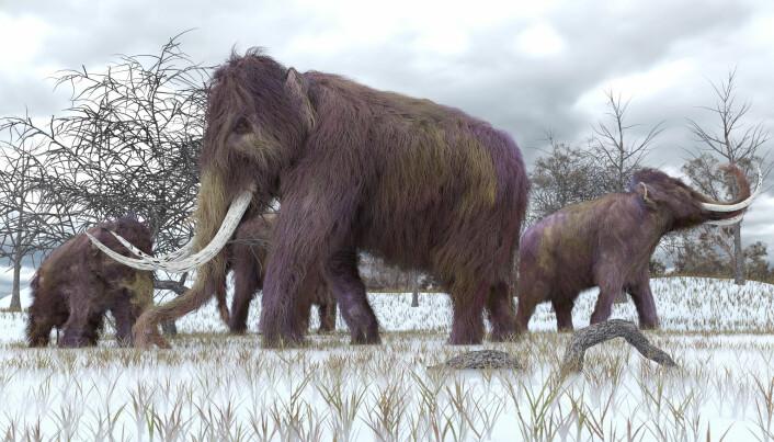 Mammuter var store, hårete beist. De var laget for å takle istid og kaldt klima. De ble utryddet for omtrent 4000 år siden.