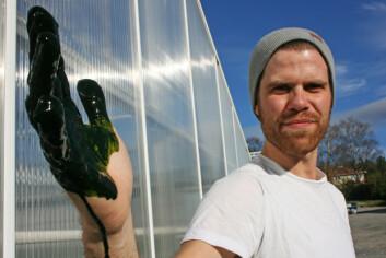 """""""Anstein Freberg ser mange muligheter i alger. Foto: Eivind Norum, UMB"""""""