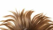 Håret gjemmer et kjemisk avtrykk av alt vi har hatt i blodet. Colourbox