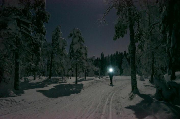 (Foto: Arnfinn Christensen, forskning.no)