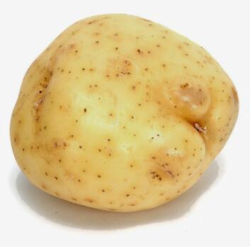 """""""Ved hjelp av planteforedling har man klart å redusere potetens gitighet."""""""