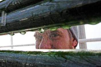 """""""Holder øye med algene. Anstein Freberg følger med utviklingen. Foto: Eivind Norum, UMB"""""""