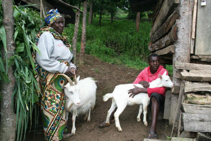 Elitha Fabian har hatt norske geiter siden 1988, året da melkegeitprosjektet kom til landsbyen. Nå har hun 15 geiter. Her får hun hjelp fra barnebarnet Gaitan Daniel Kulinyangwa til å passe dem. (Foto: Asle Rønning)