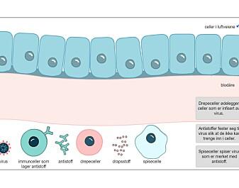 Her kan du lære om virus og vaksiner