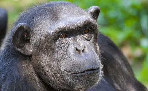 Dyr med stor hjerne har kanskje bare liten kropp