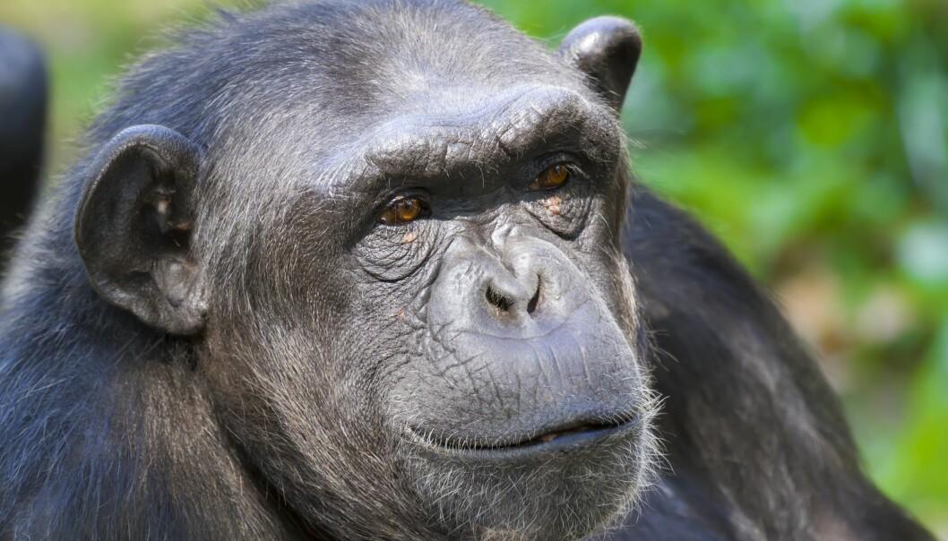 Hvorfor har noen dyr større hjerne i forhold til kroppen, enn andre? Det kan skyldes flere ting, ifølge den nye forskningen.