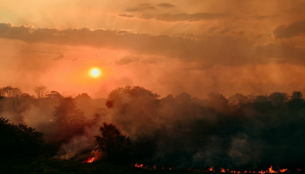 Arkeologene tror menneskene som bosatte seg ved Lake Malawi brant ned skog for å åpne landskapet og slik få tilgang til mat.