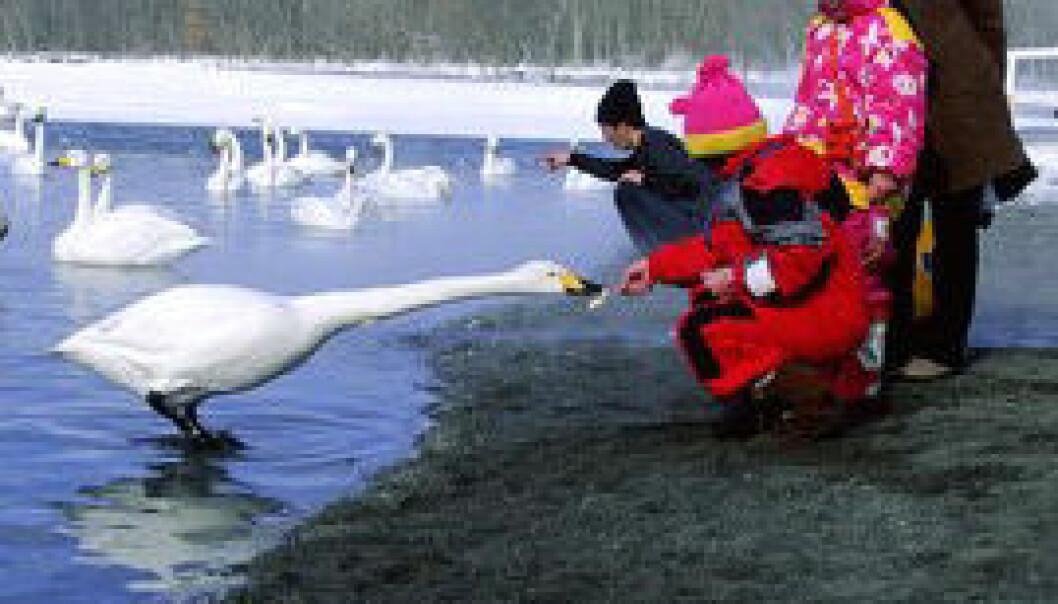 Å snakke med barna om fugleinfluensa