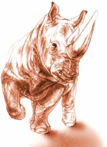 Slik tror forskerne at det 9,2 millioner år gamle neshornet kan ha sett ut før det ble kokt levende på nærmere 500 grader. (Foto: (Illustrasjon: Maëva J. Orliac))