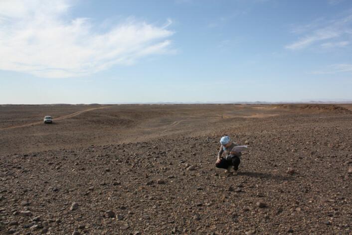 Landskapet i området der Tissint-meteoritten falt, sør i Marokko, er kanskje ikke så forskjellig fra steinens hjemtrakter. (Foto: H. Chennaoui Aoudjehane)